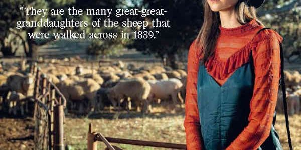 Stephanie Field with Anlaby Merino Sheep in Background - Advertiser Article - Photo Tom Huntley